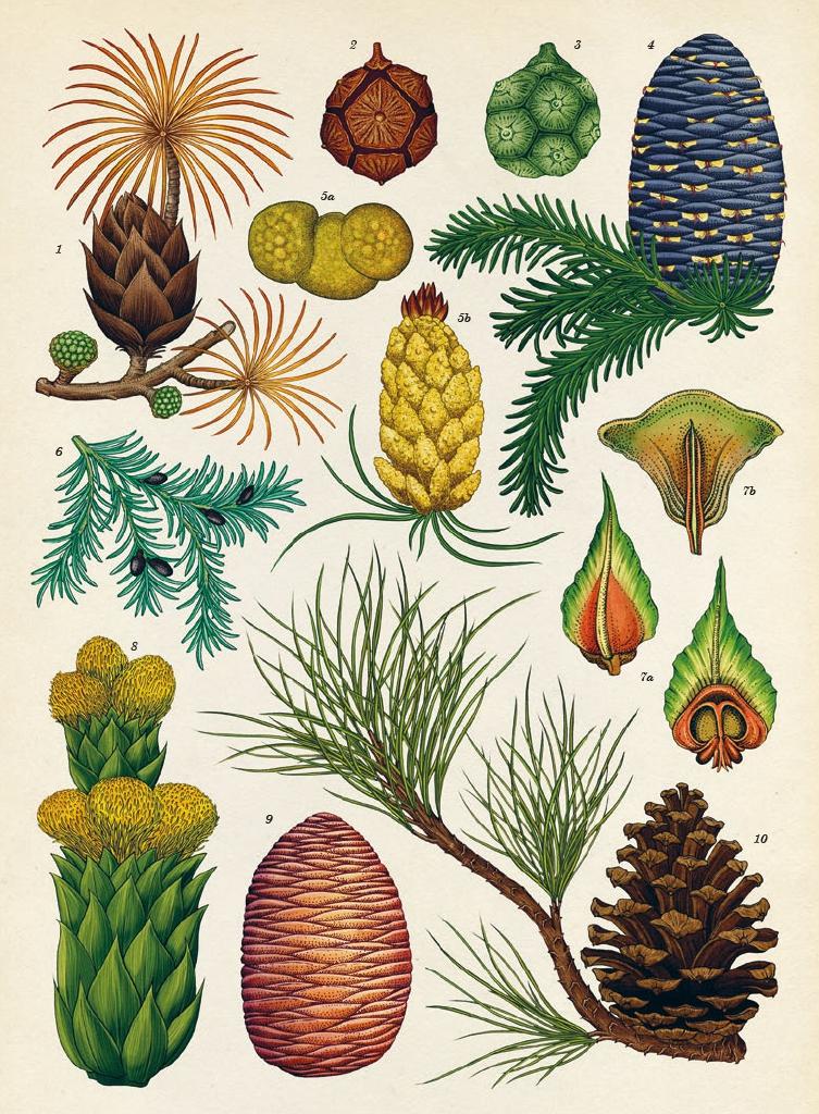 Extrait n°3 de la bd Botanicum par Katie Scott