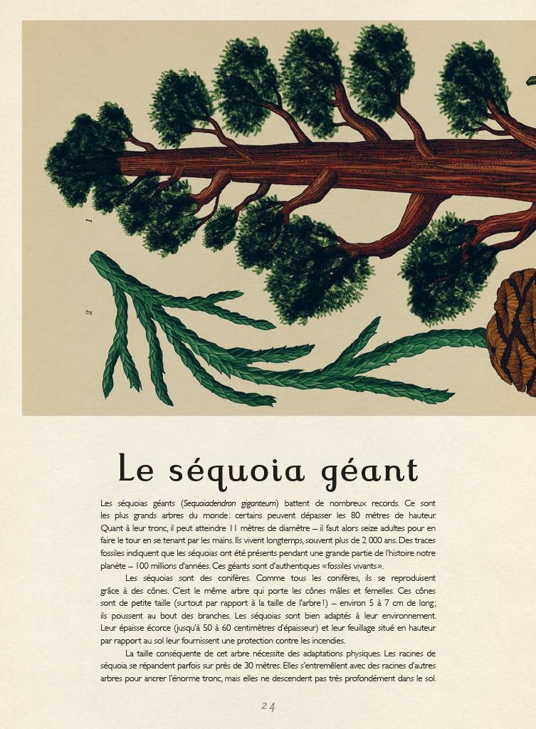 Extrait n°4 de la bd Botanicum par Katie Scott