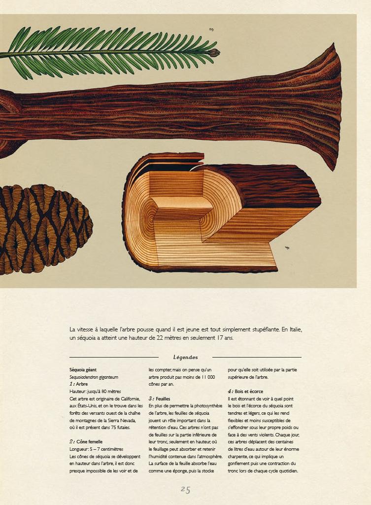 Extrait n°5 de la bd Botanicum par Katie Scott